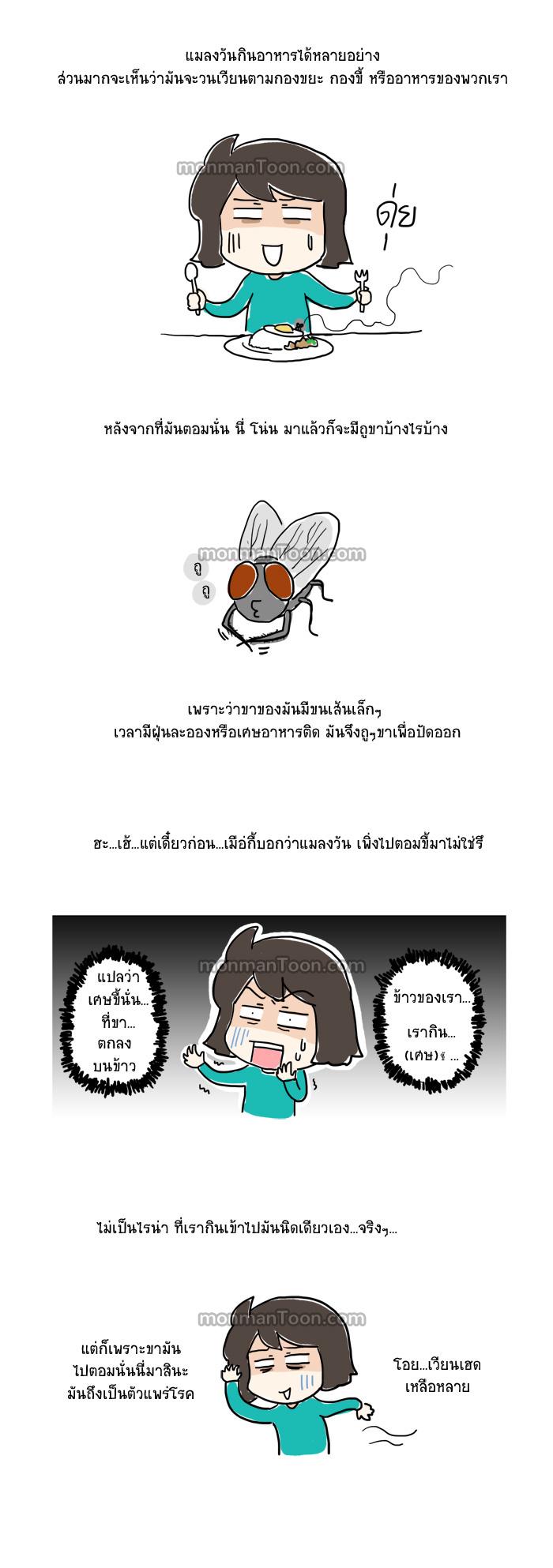 3 เรื่องของแมลงวัน และวิธีการต่อกร (โดยไม่มีการเสียเลือดเนื้อ)